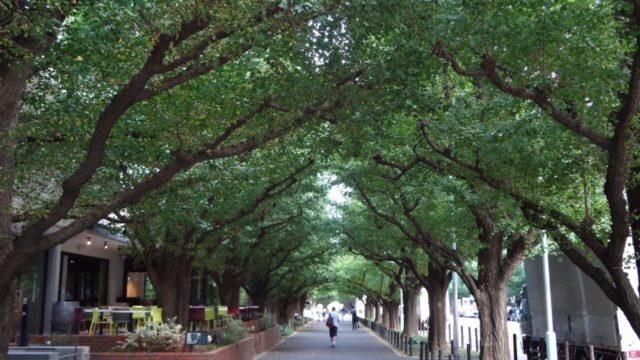 明治神宮外苑周辺のランニングステーション3選(ランステ)